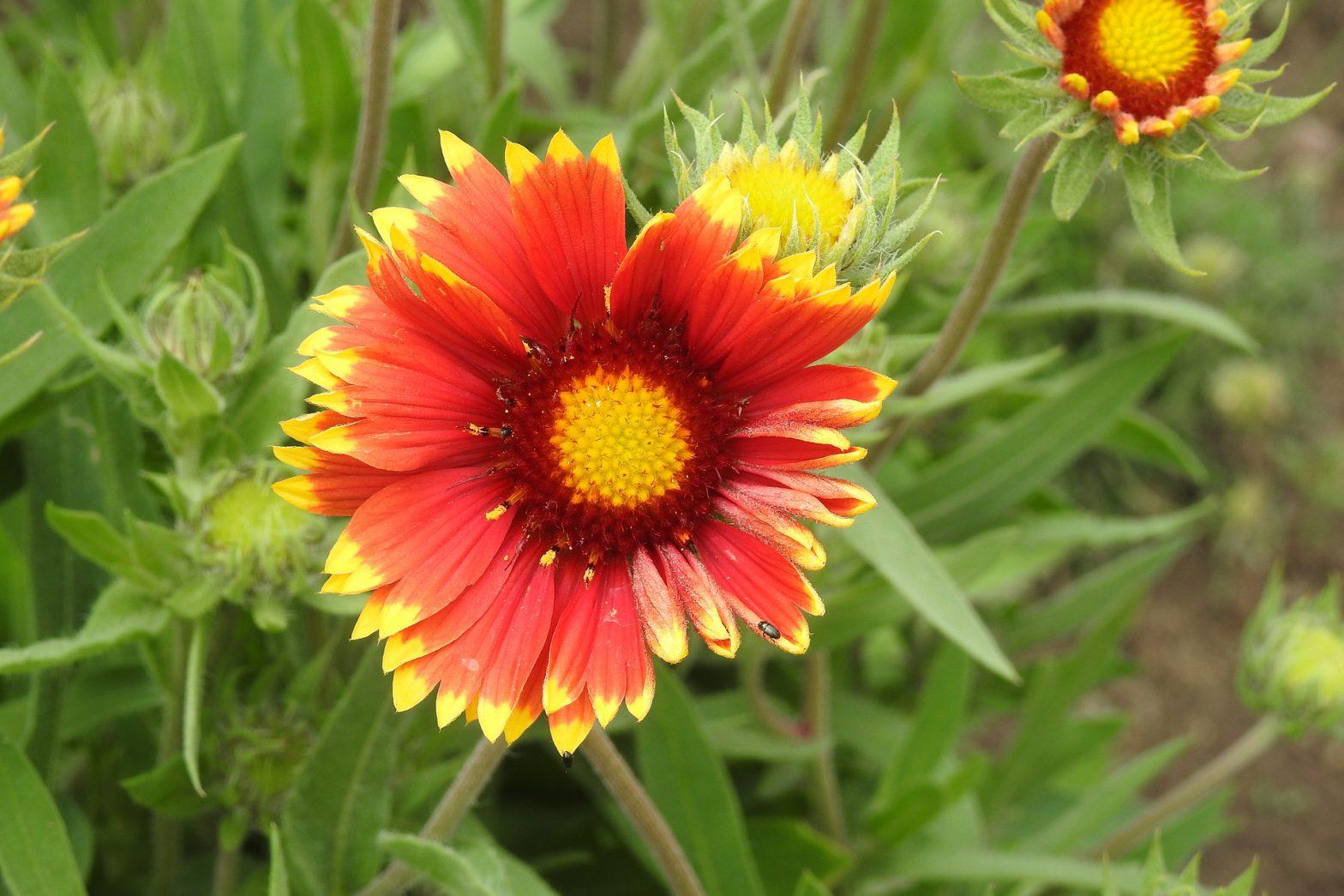 Kwiaty długo kwitnące świetnie zdobią ogród